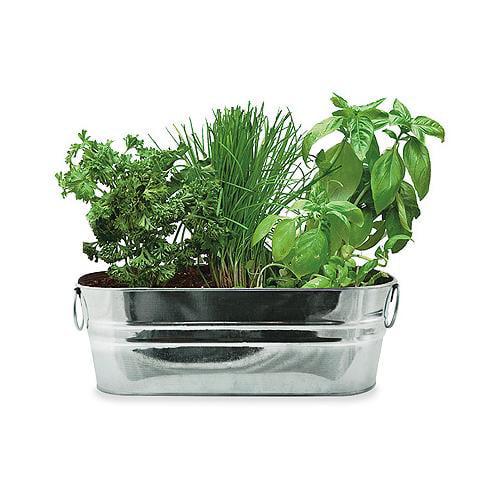 Buzzy 94330 Kitchen Herb Windowsill Grow Kit Walmartcom