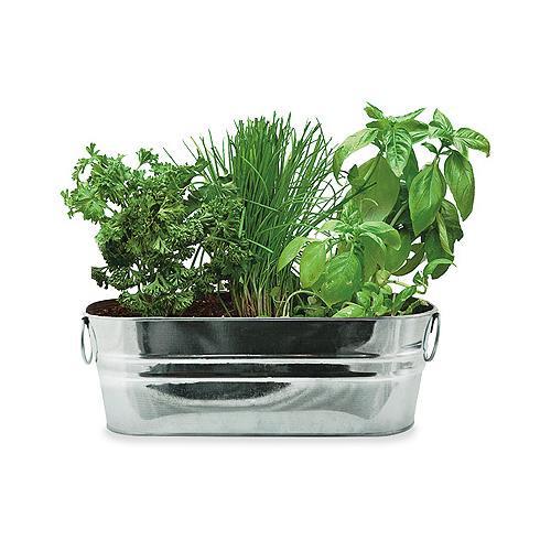 Great Buzzy 94330 Kitchen Herb Windowsill Grow Kit