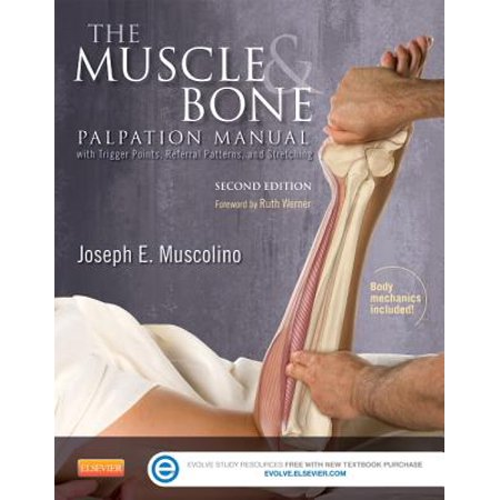 - The Muscle and Bone Palpation Manual with Trigger Points, Referral Patterns and Stretching