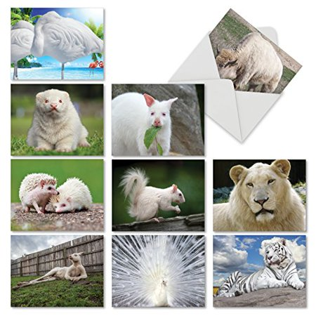 'M6447OCB ALBINAMALS' 10 Assorted All Occasions Note Cards Featuring a Stunning Display of  Uniquely White Animals with Envelopes by The Best Card