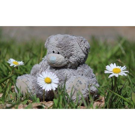Canvas Print Bear Daisies Teddy Bear Flowers Love Teddy Cute Stretched Canvas 10 x 14 (Daisy Love)