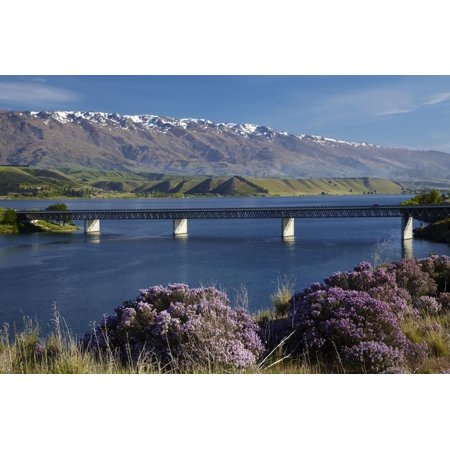 Wild Thyme in Flower in Spring, Deadman's Point Bridge and Lake Dunstan, South Island, New Zealand Print Wall Art By David Wall