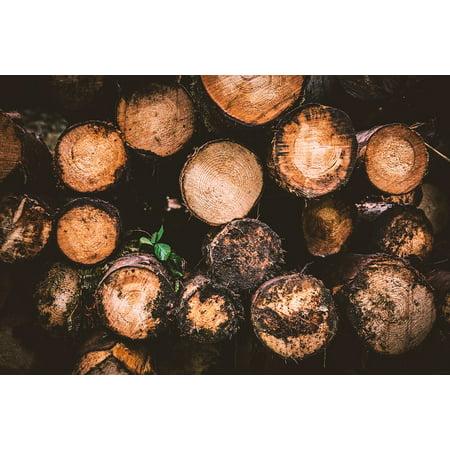 LAMINATED POSTER Tree Stump Log Holzstapel Wood Logging Poster Print 24 x 36