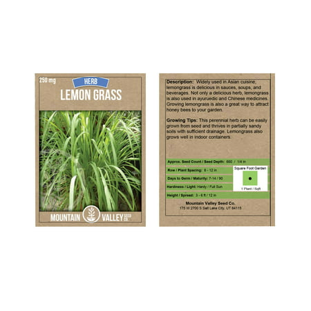 Garden Plants Grasses - Lemon Grass Seeds - 250 g Packet - Non-GMO, Heirloom Culinary Herb Garden Seeds - Cymbopogon flexuosus