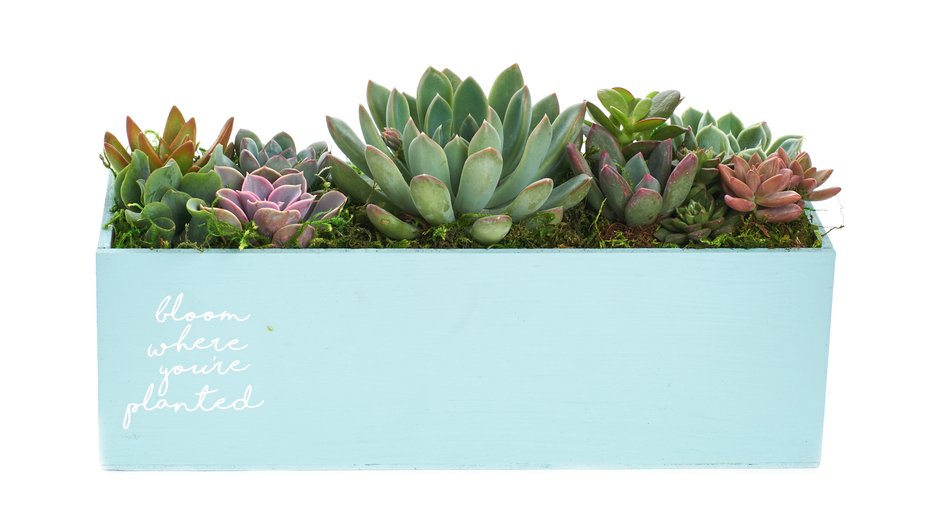 Bloom Where You Re Planted Spring Succulent Planter Easter Centerpiece Arrives Planted 12 Blue Succulent Planter Walmart Com Walmart Com