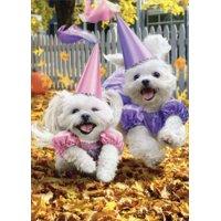 Avanti Press Princess Dogs Trick Or Treating Funny / Humorous Halloween Card