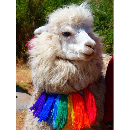 Canvas Print Sweet Alpaca Scarf Lama Animal Colorful Stretched Canvas 10 x 14