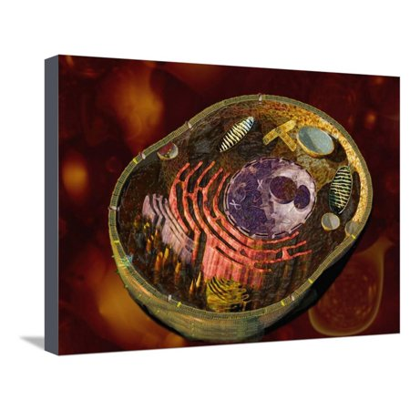 Biomedical Illustration of a Generalized Animal Cell Section Showing its Major Organelles Stretched Canvas Print Wall Art By Carol & Mike