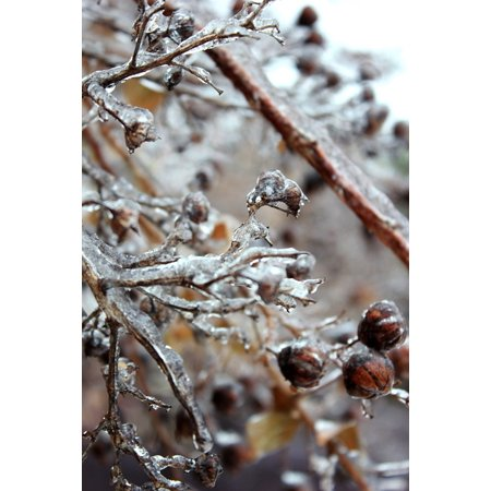Canvas Print Ice Winter Freezing Freezing Rain ICY Frozen Stretched Canvas 10 x