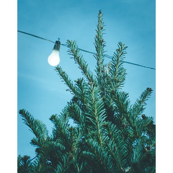 LAMINATED POSTER Blue Tree Bulb Sky Wire Light Poster Print 24 x 36 ...