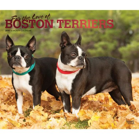 Yorkshire Terrier Calendar (2019 Boston Terriers Deluxe Wall Calendar, by BrownTrout)