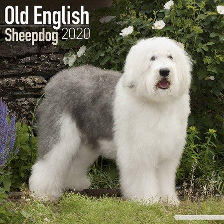 Sheepdog 2010 Calendar - Old English Sheepdog Calendar 2020 - Sheep Dog Breed Calendar - Sheepdog Premium Wall Calendar 2020