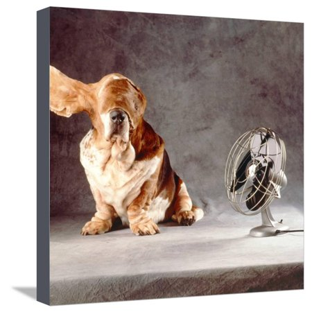 A Basset Who Is Sitting with Flying