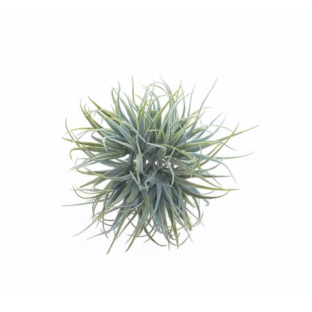 """Melrose 4"""" Artificial Air Plant Orb Hanging Decoration - Green"""
