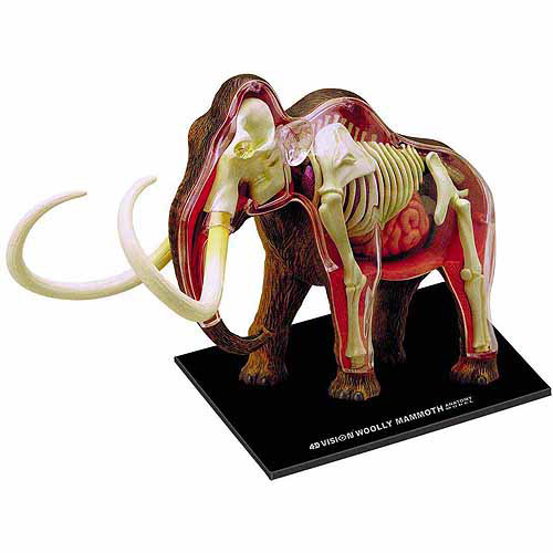 4D Wolly Mammoth Anatomy Model