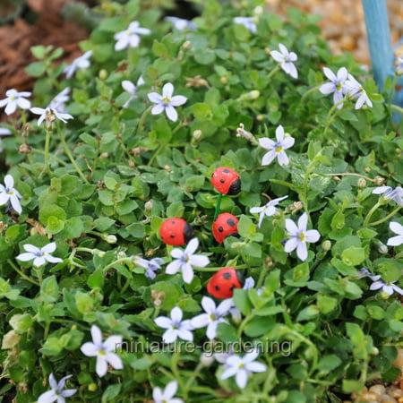 Ladybug Miniature (Miniature Little Ladybugs, 4 Piece Set for Miniature Garden, Fairy Garden )