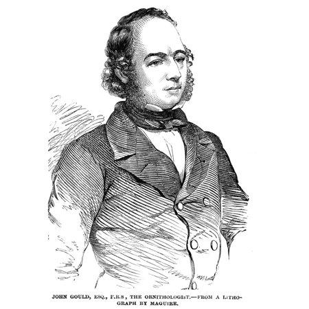 John Gould (1804-1881) Nenglish Ornithologist Wood ... John Gould Md Birmingham