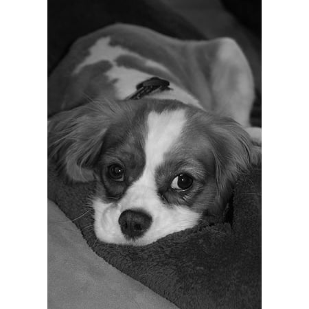 Canvas Print Dog Pet Cute Adorable Puppy Canine Funny Animal Stretched Canvas 10 x - Cute Funny Puppys