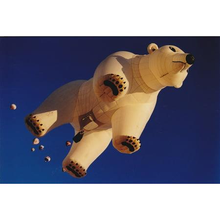 LAMINATED POSTER Bear Hot Air Balloon Sky Balloon Albuquerque Blue Poster 24x16 Adhesive Decal - Pinata Albuquerque