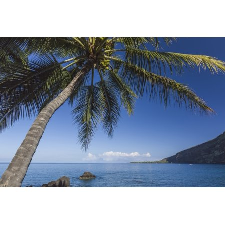 Coconut Palm (Cocos nucifera) on Kealakekua Bay with view of Captain Cook Monument Kona Hawaii Island of Hawaii United States of America Canvas Art - Alvis Upitis Design Pics (19 x 12)