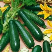 Sunburst Squash Seed - Squash Zucchini Black Beauty Seed - 1 Packet
