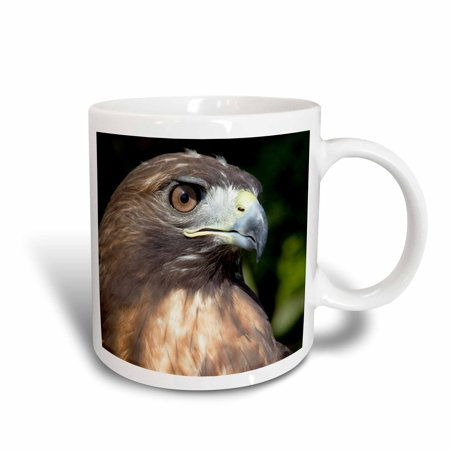 3dRose USVI, St. Croix, Red-tailed hawk, bird-CA37 AJN0035 - Alison Jones, Ceramic Mug, 11-ounce
