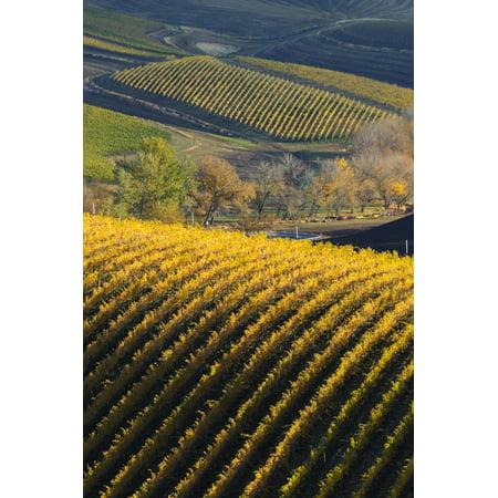 Washington State, Walla Walla. Spring Valley and Vineyards Print Wall Art By Richard (Syrah Walla Walla Valley Powerline Estate 2014)