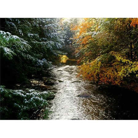 Posterazzi DPI1803932LARGE Forest with Creek Running Through It Poster Print by David Chapman, 32 x 24 - Large - image 1 of 1