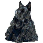- Black Scottish Terrier Dog Portrait Counted Cross Stitch Pattern