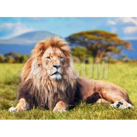 Big Lion Lying on Savannah Grass. Landscape with Characteristic Trees on the Plain and Hills in The Print Wall Art By Michal