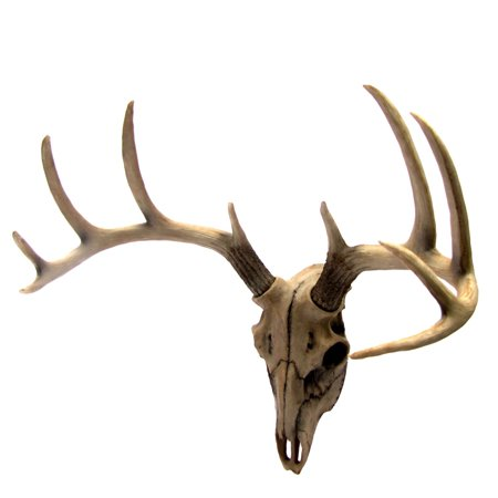 Buck Head Wall Mount Resin Deer Skull Antler Rack Bust Hunting Cabin/Lodge Decor