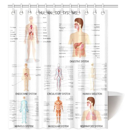 MYPOP Human Anatomy Shower Curtain, Complete Chart of Different Human Organ System Cell Life Medical Illustration, Fabric Bathroom Decor Set with Hooks, 60 X 72 Inches Long
