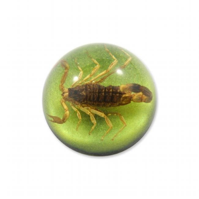 ED SPELDY EAST TC103 Terrain-Small Gold Scorpion  Green Background