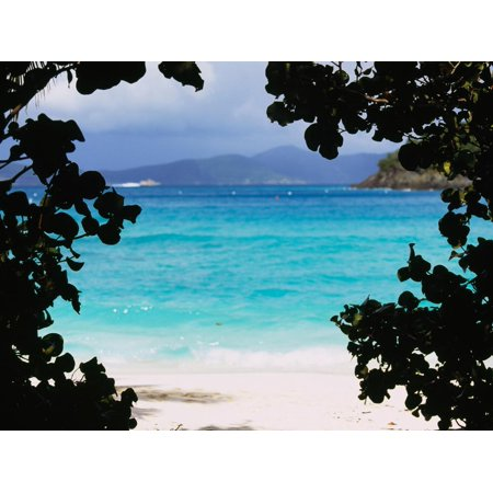 - Panoramic View of a Beach, Cinnamon Bay, St. John, Us Virgin Islands, USA Print Wall Art