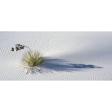 Soaptree Yucca  Yucca Elata  On Wind Rippled Dunes White Sands National Monument New Mexico Usa Canvas Art   Panoramic Images  27 X 9