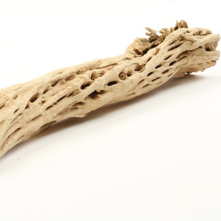 Koyal Wholesale Cholla Wood 6-Inch, Aquarium Branches, Airplants Decor, Reptile Perch, Natural Home - Reptile Decor