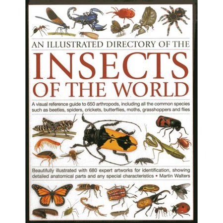 An Illustrated Directory of the Insects of the World: A Visual Reference Guide to 650 Arthropods, Including All the Common Insect Species Such As Beetles, Spiders, Crickets, Butterflies, Moths, Grasshoppe