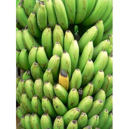 Bandana Frame - Framed Art for Your Wall Green Flora Fruits Yellow Banana Plants Bananas 10x13 Frame
