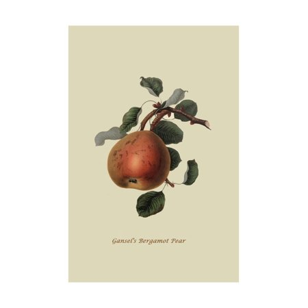 Gansel's Bergamot Pear Print Wall Art By William