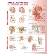 Anatomy and Injuries of the Head and Neck Anatomical Chart