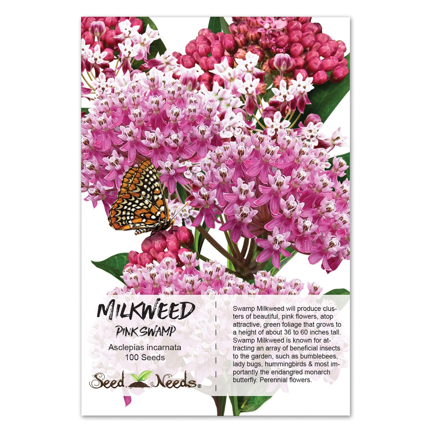 Packet of 100 Seeds, Swamp Milkweed (Asclepias incarnata) Open Pollinated Seeds by Seed Needs USA