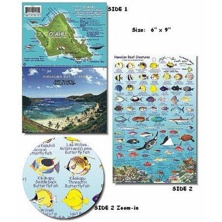 O 39 ahu hawaii reef fish and creature guide for Hawaiian reef fish identification