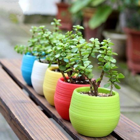 5.5in Flower Pot In Assorted Colors