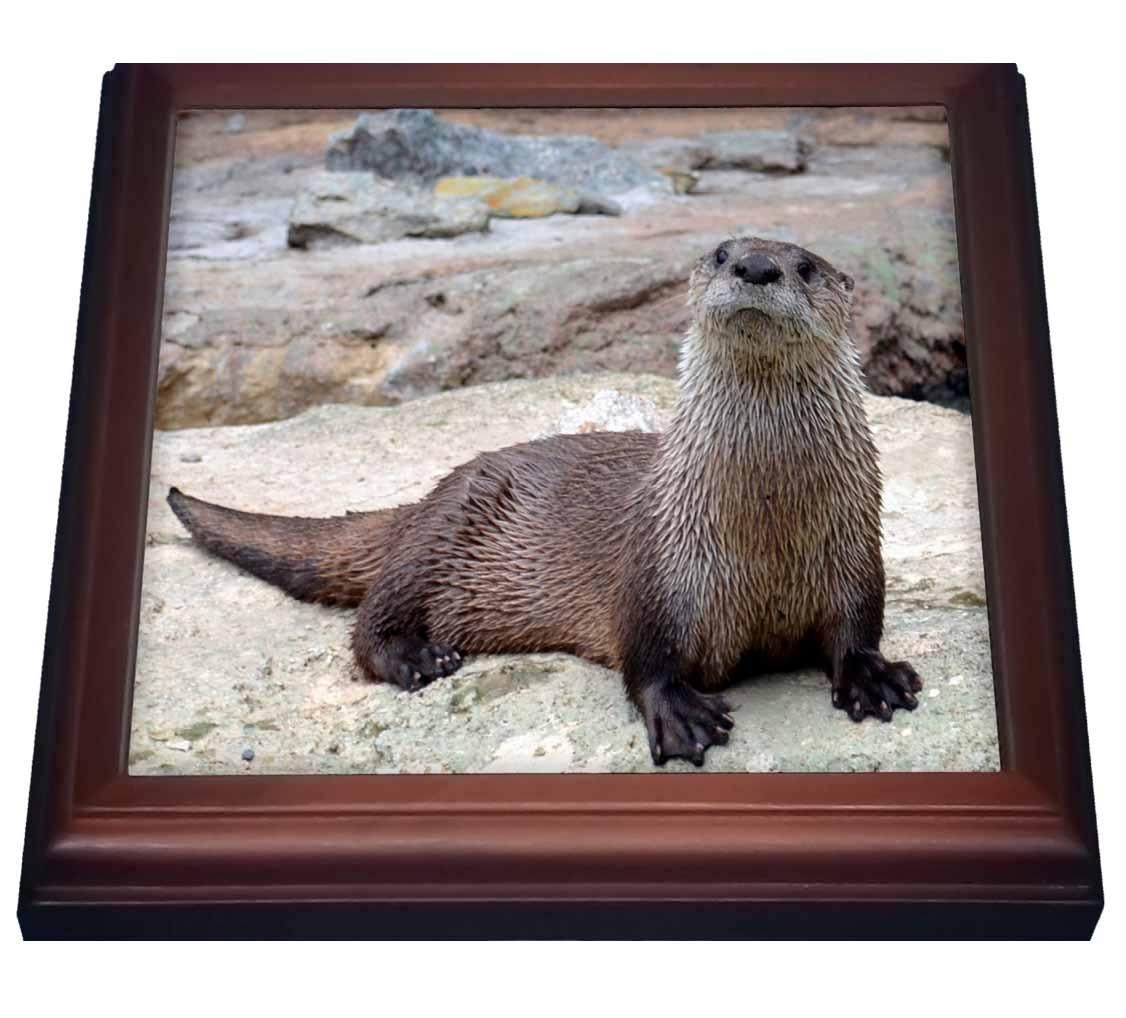 3dRose Otter Two An Otter Picture, Trivet with Ceramic Tile, 8 by 8-inch