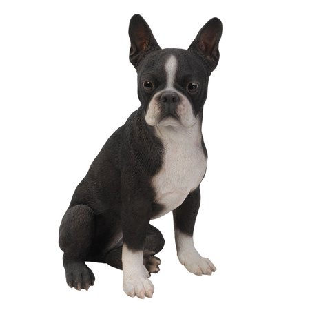 Realistic Life Size Boston Terrier Statue Detailed Sculpture Glass Eyes Hand Painted Resin 16 inch Figurine Home Decor Amazing