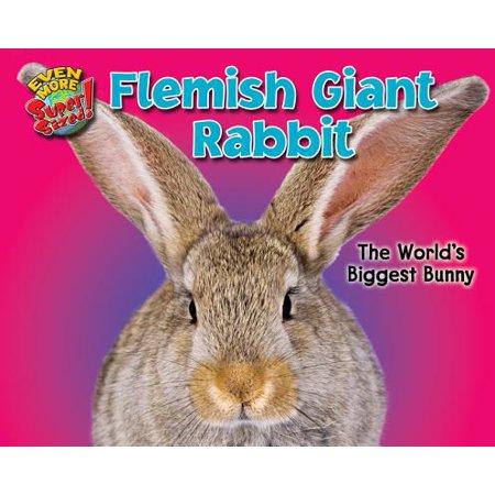 Flemish Giant Rabbit The World S Biggest Bunny
