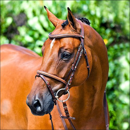 FULL HORZE CONSTANCE PADDED NOSEBAND SNAFFLE STITCHED FLASH HORSE BRIDLE BROWN