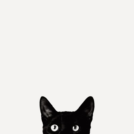 Curiosity Cat Whimsical Black and White Animal Photo Print Wall Art By Jon Bertelli Convert Black And White Photos