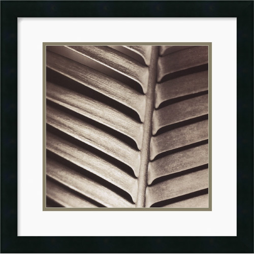 Amanti Art 'Skeleton Back' by Jesse Canales Framed Photographic Print