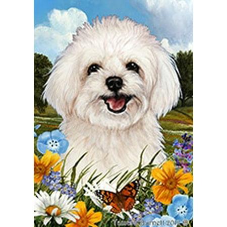 Maltipoo - Best of Breed  Summer Flowers Garden